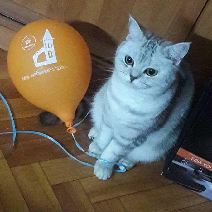 Призы конкурса с шариками нашли своих участников